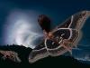 Black Witch Moth (Ascalapha odorata)